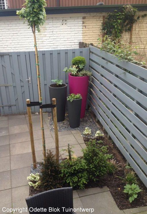 Bomen voor de kleine tuin inrichting for Huis in de tuin
