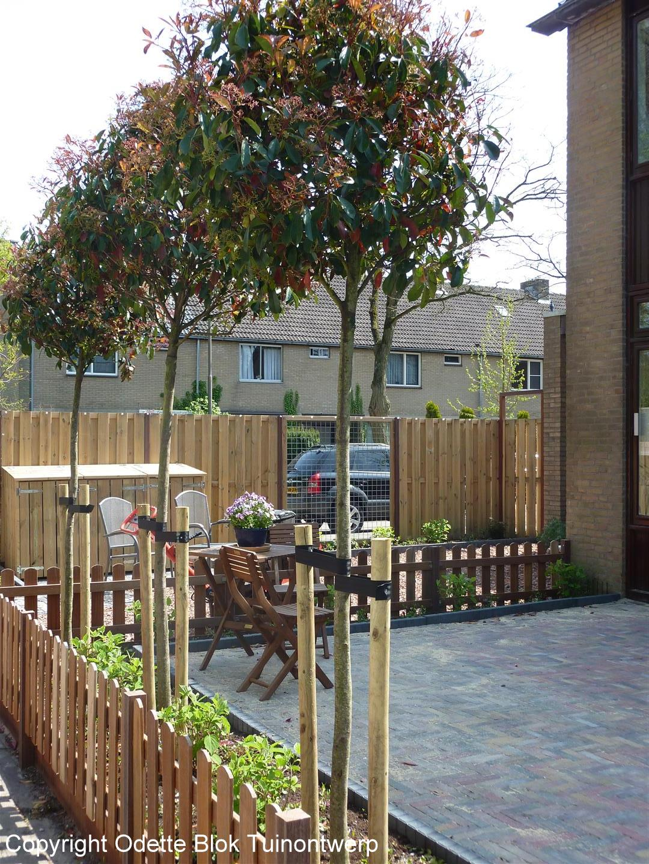 bomen kleine tuin