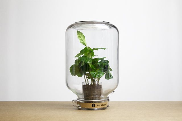 Nya Interieurontwerp Pikaplant Jar 1