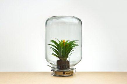Nya Interieurontwerp Pikaplant Jar 3