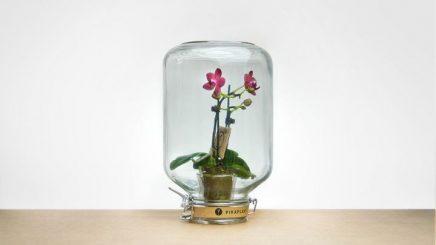Nya Interieurontwerp Pikaplant Jar 4
