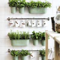 Binnen kruiden kweken op een stijlvolle manier
