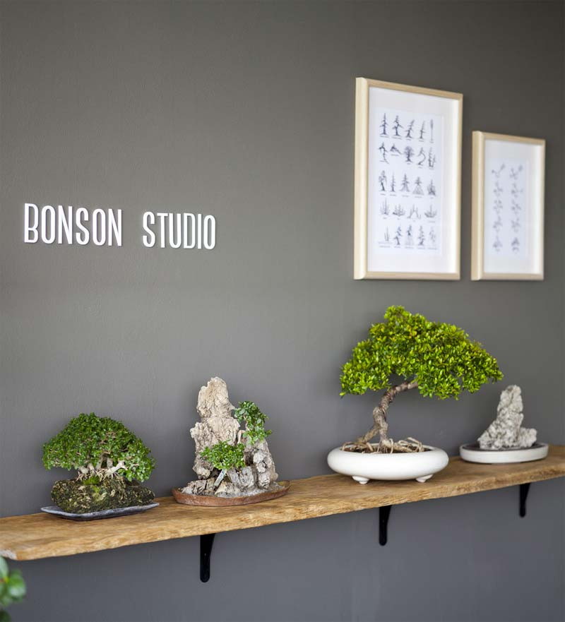 bonsai boom op plank