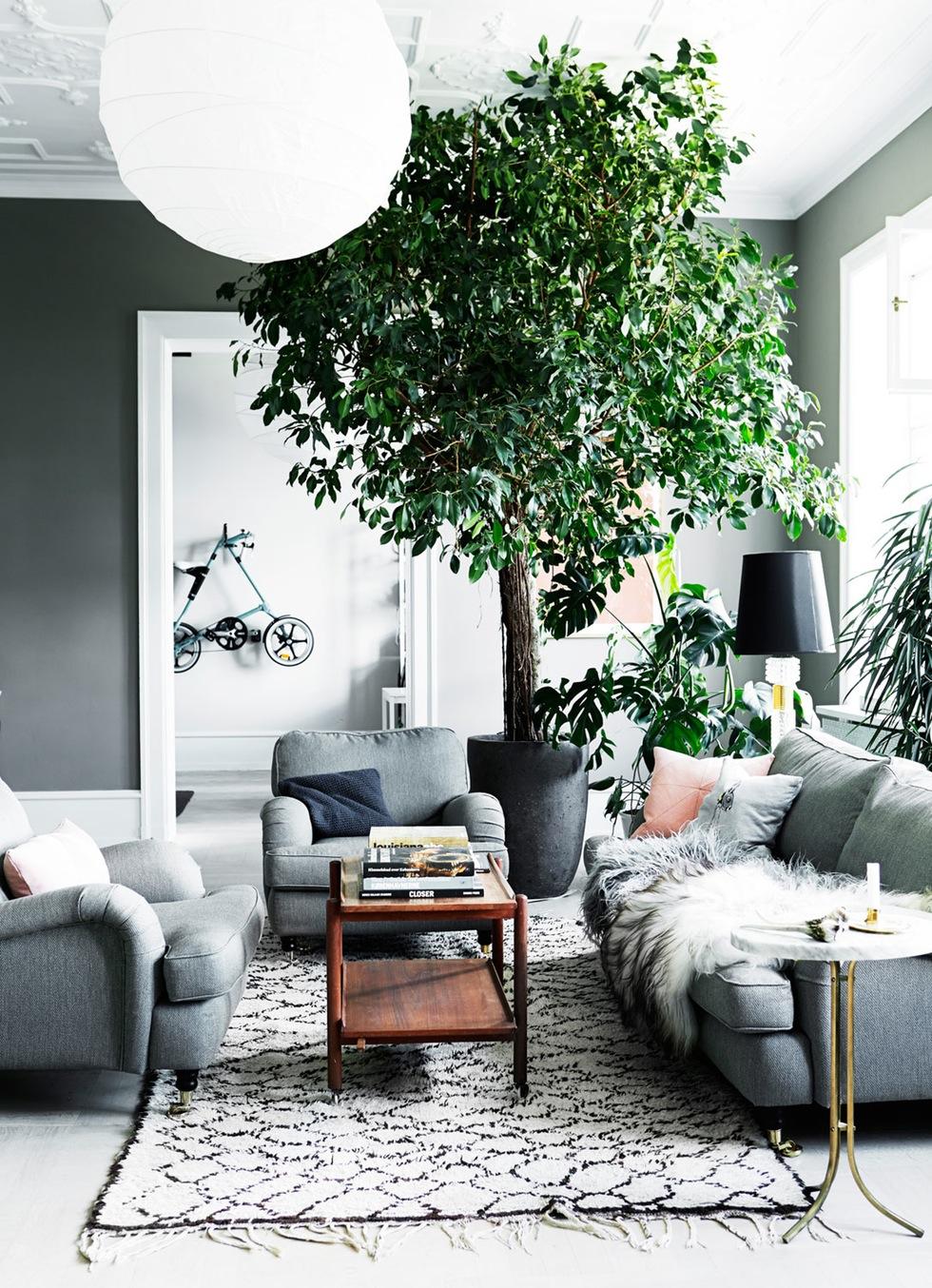 Boom in huis | Inrichting-huis.com