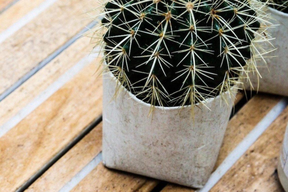 cactus-tuin