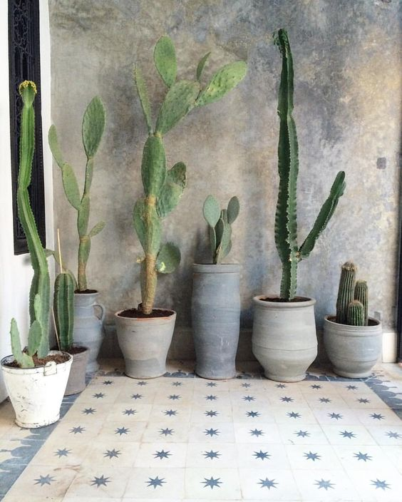 Cactussen in de tuin