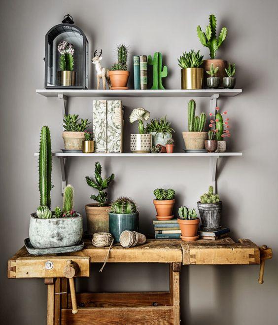cactussen-verzameling