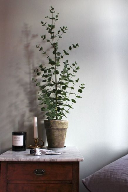 15x eucalyptus in huis inrichting. Black Bedroom Furniture Sets. Home Design Ideas