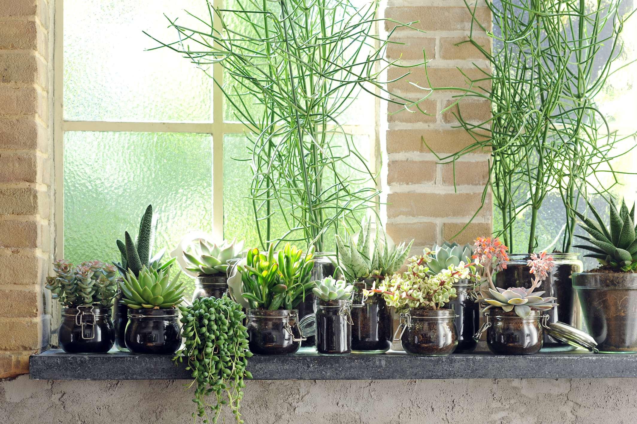 de kracht van planten in je huis inrichting. Black Bedroom Furniture Sets. Home Design Ideas
