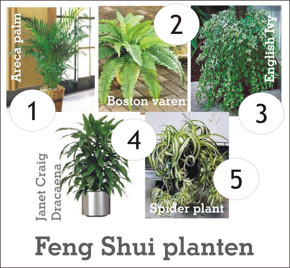 Feng Shui planten.