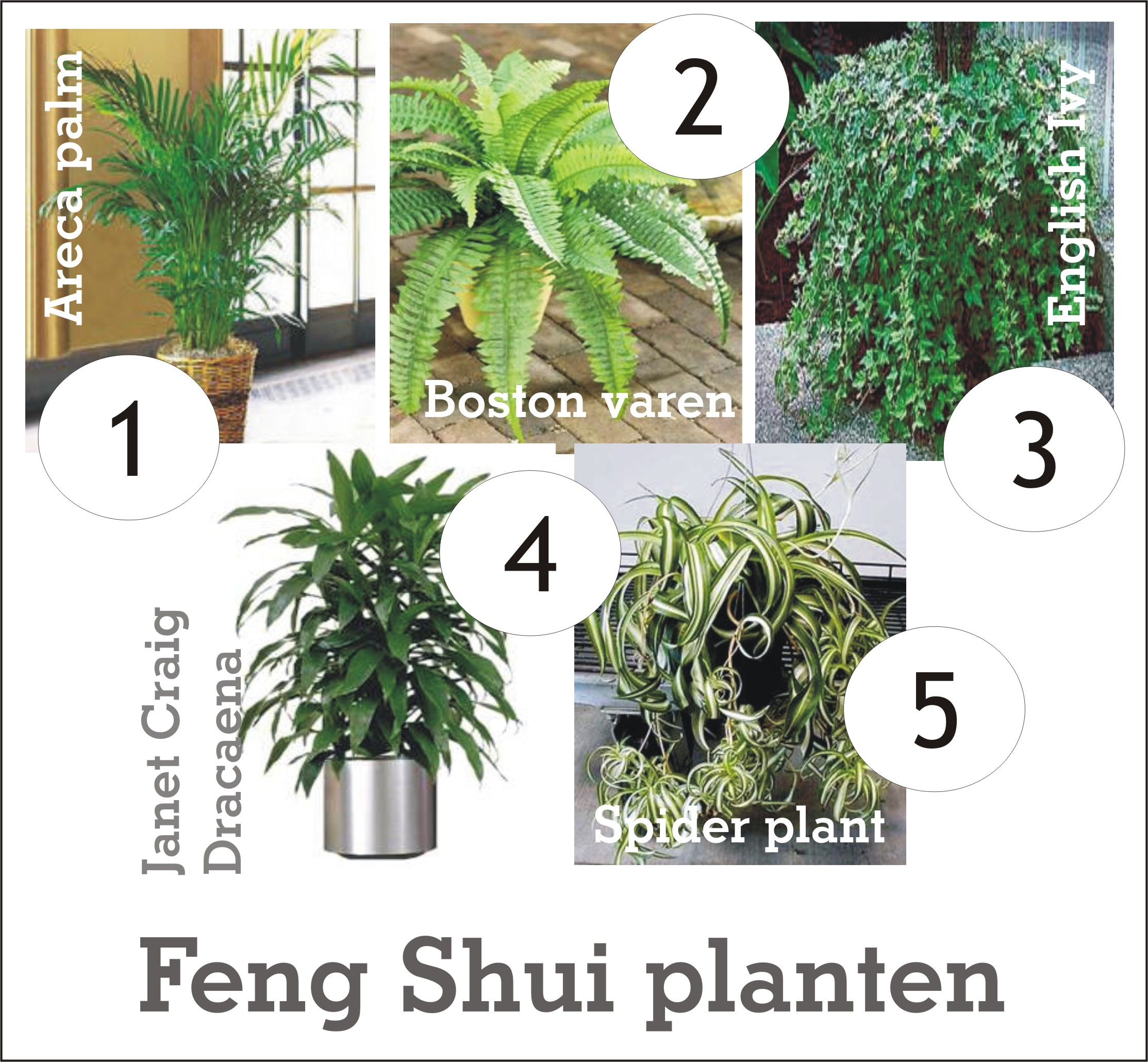 De kracht van planten in je huis inrichting - Kleur feng shui badkamer ...