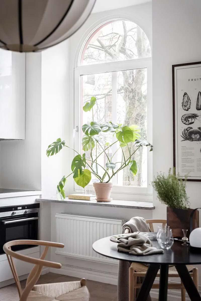 gatenplant op vensterbank