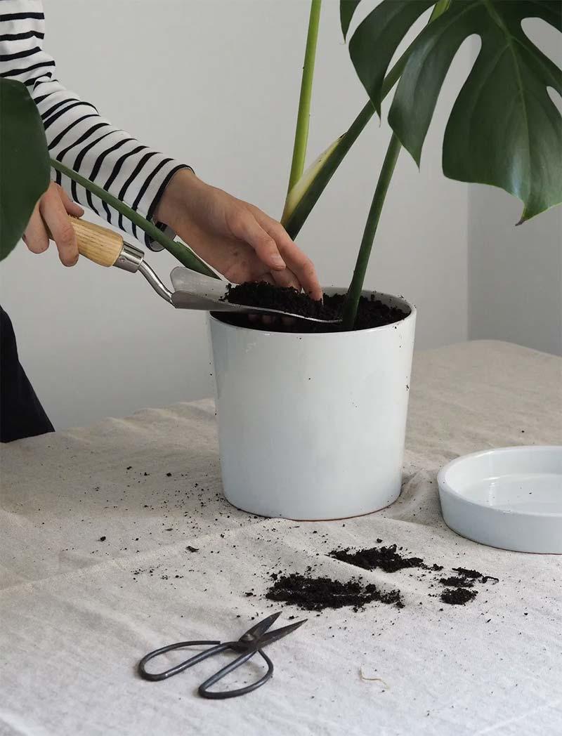 gatenplant stekken pot