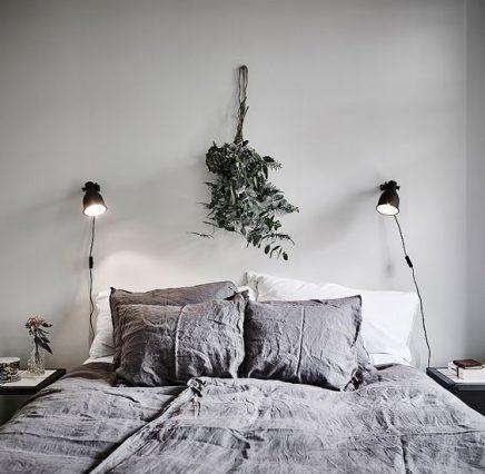 Eucalyptus plant in huis