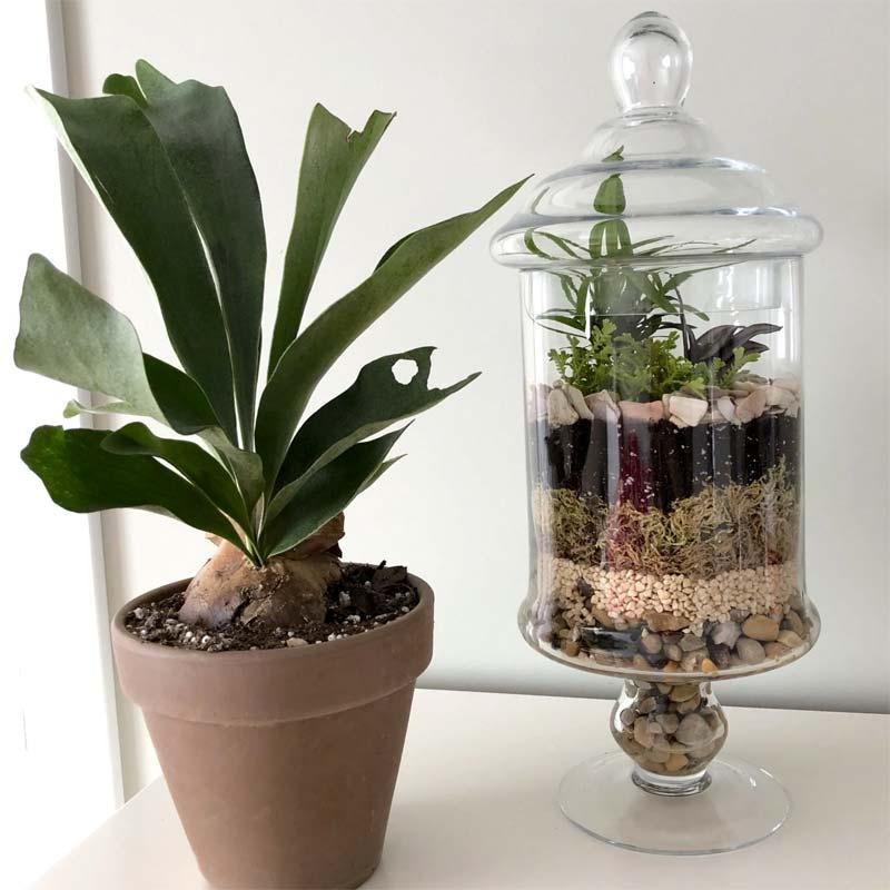 gesloten glazen terrarium
