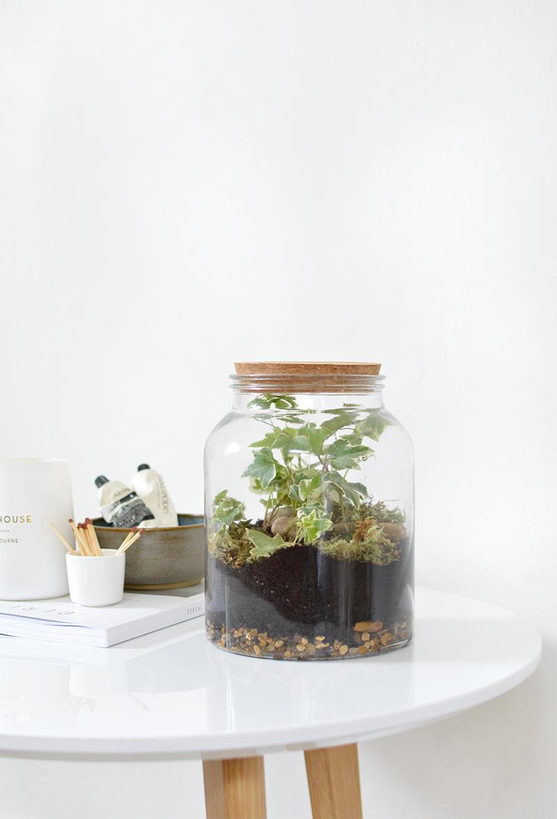 gesloten terrarium plantjes