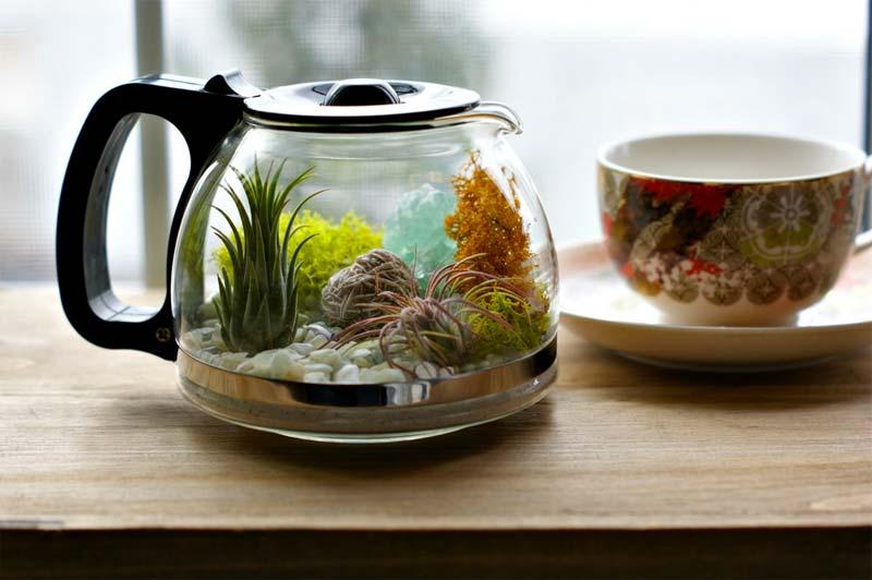 glazen koffiepot terrarium maken