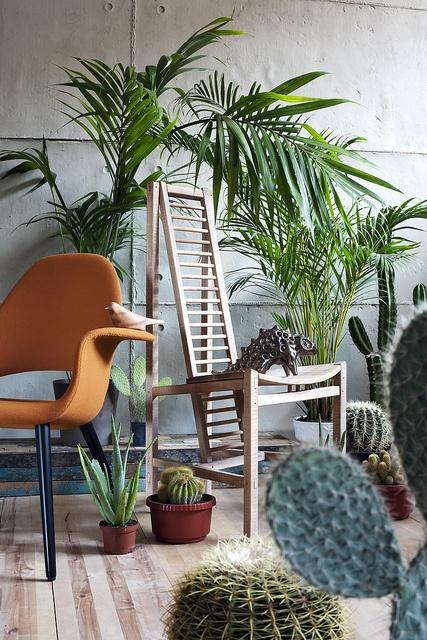 trend 2014 palmbomen
