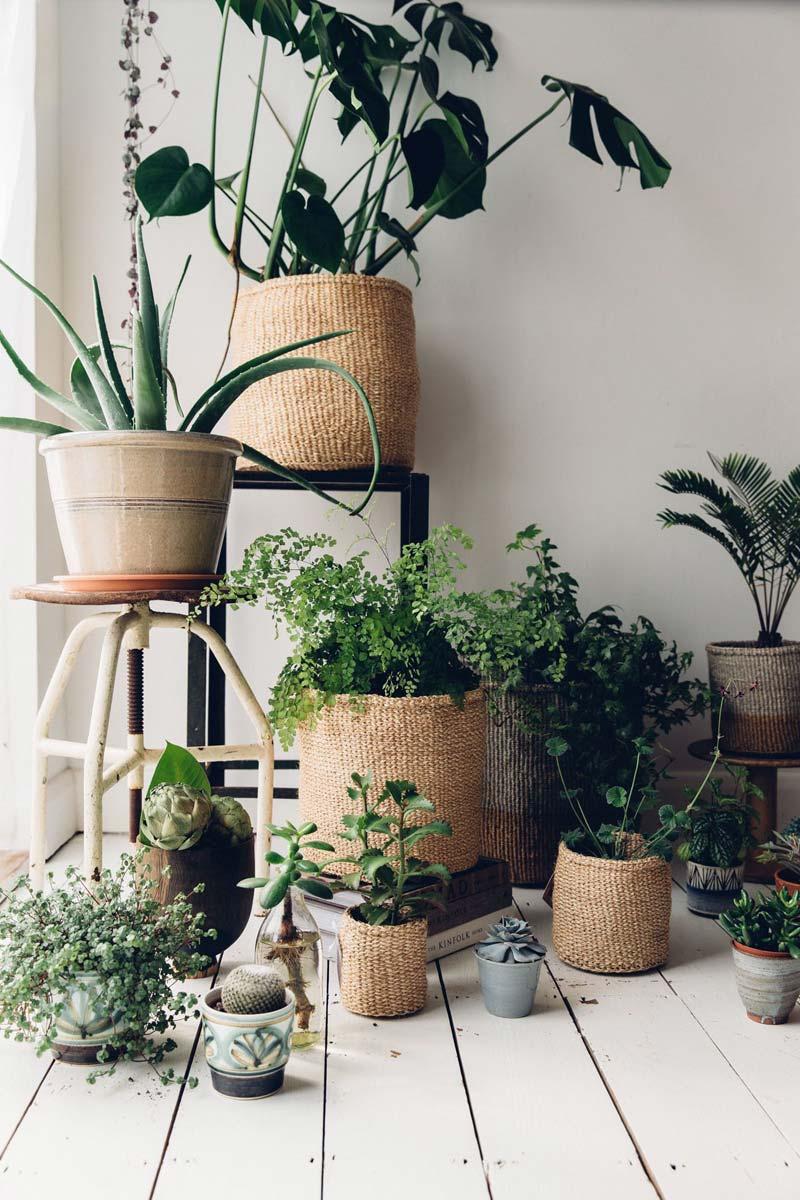 Groen interieur urban jungle