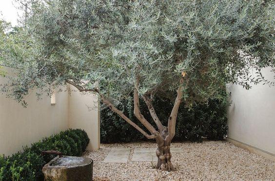 Grote boom in tuin