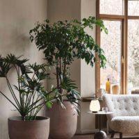 10x Grote kamerplant