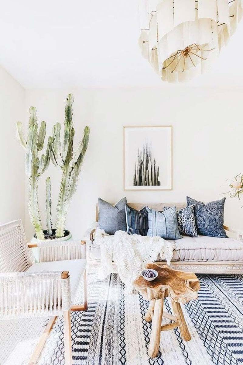 grote kamerplant cactus