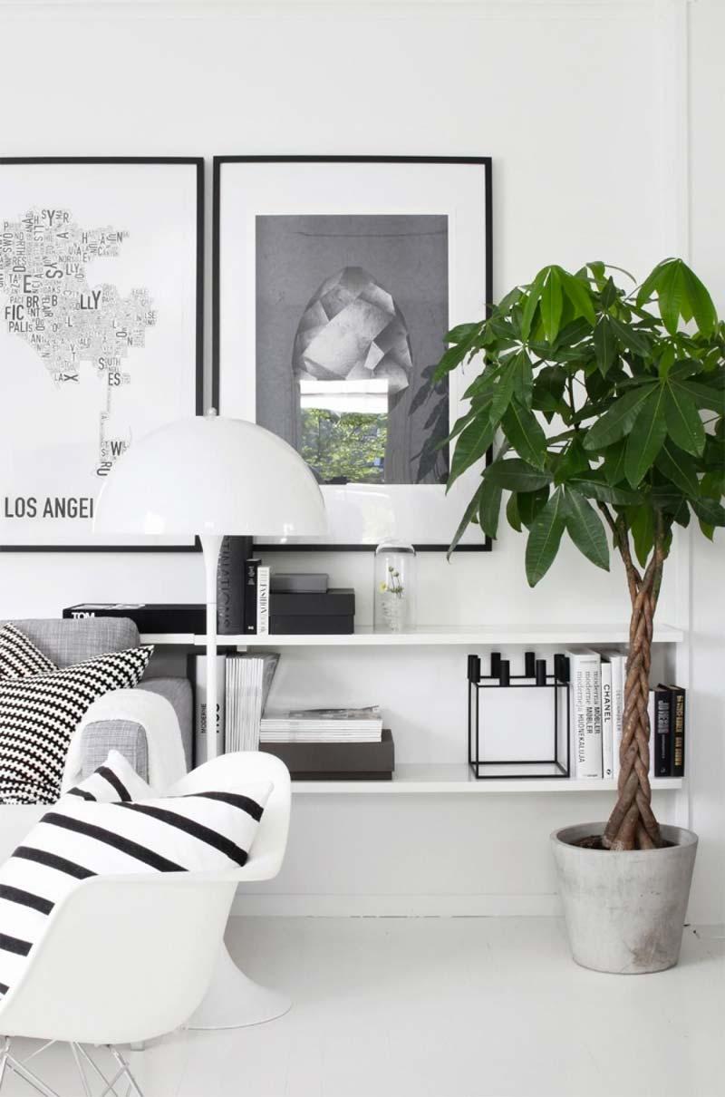 grote kamerplant geldboom