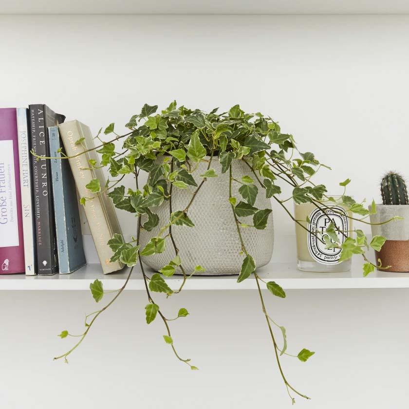 10x Hangplanten voor binnen
