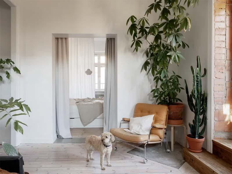 housewarming cadeau planten
