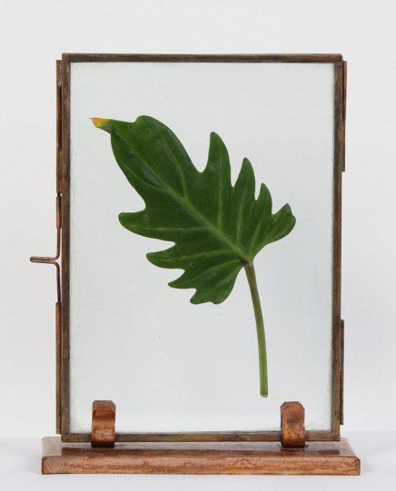 Ingelijste bladeren en bloemen