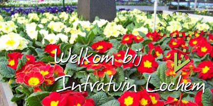 Intratuin lochem inrichting for Intratuin lochem