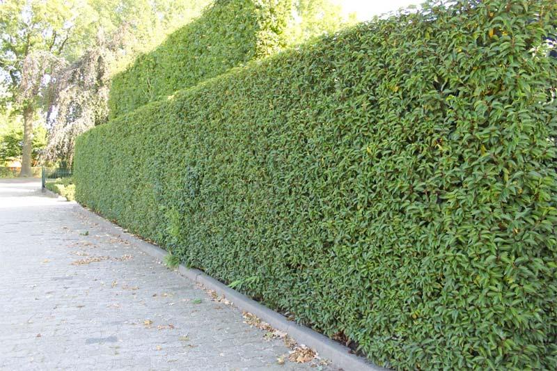 10x Kant en klare hagen