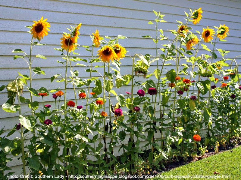 kindvriendelijke tuin wedstrijdje