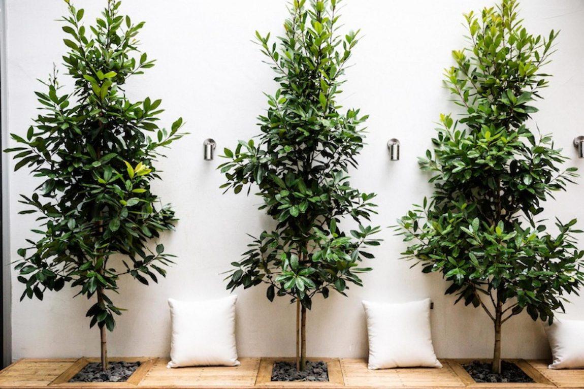 kleine-boompjes-tuin
