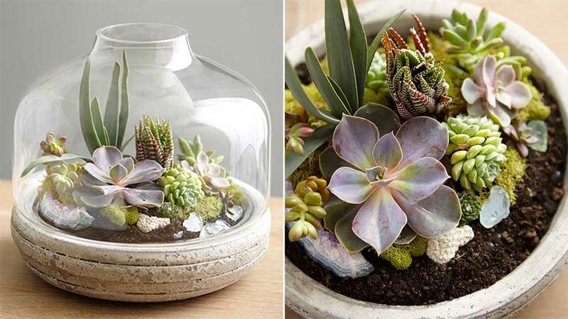 open terrarium plantjes