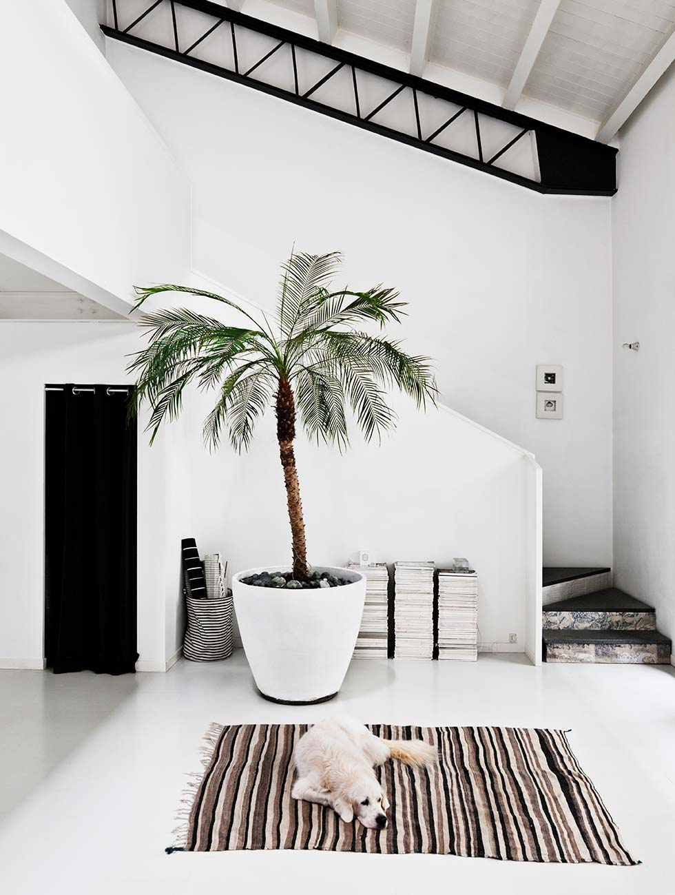 Palm in huis