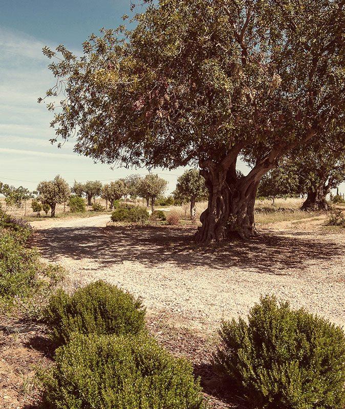 Pensão Agrícola in Portugal