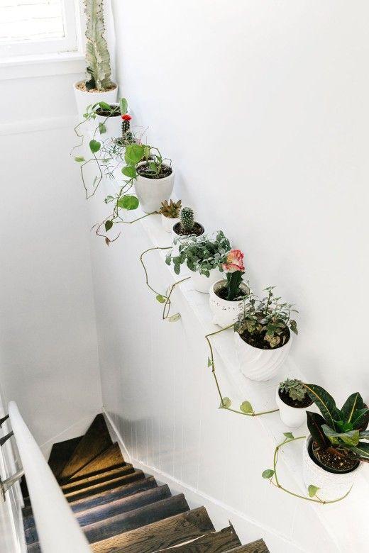 Planten bij de trap