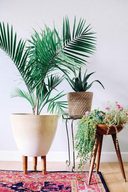 Plantenstandaard