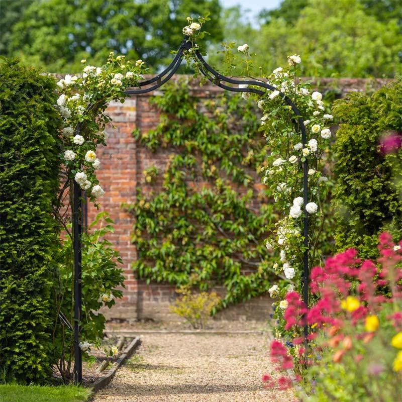 rozenboog witte rozen