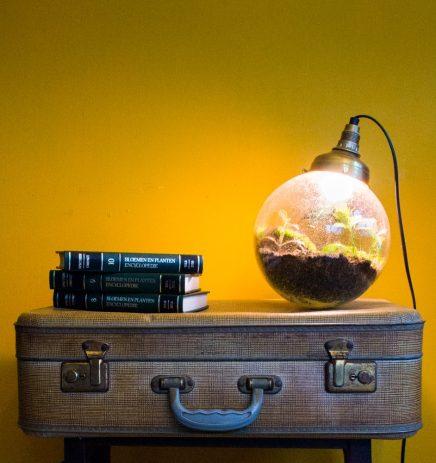 Spruitje, de plantlamp