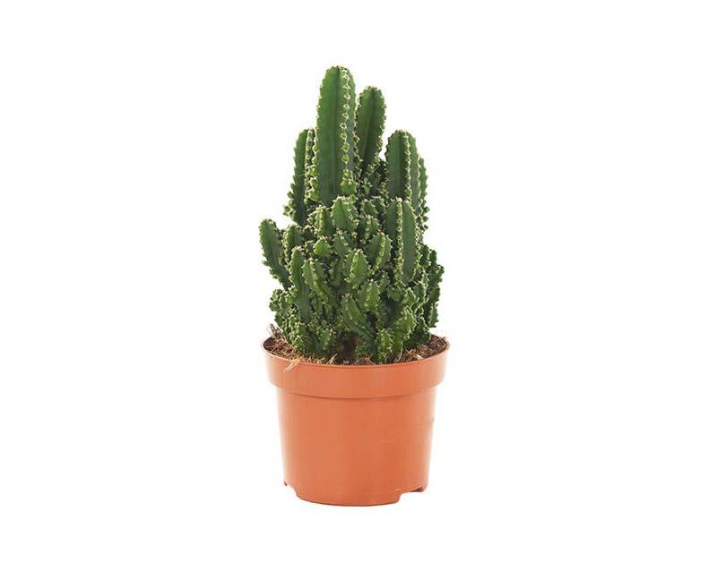 terrarium plantjes cactussen