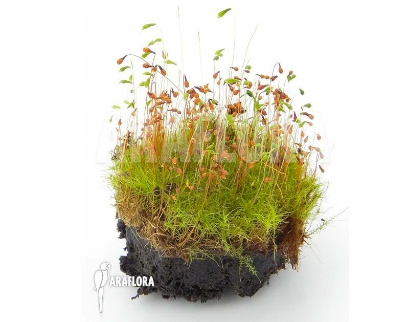 terrarium plantjes mossen