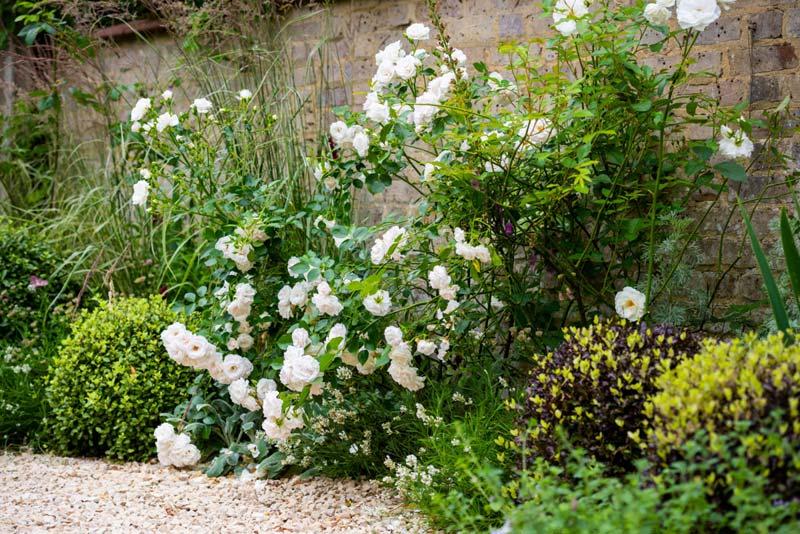 tuin voorbeelden grindtuin beplanting