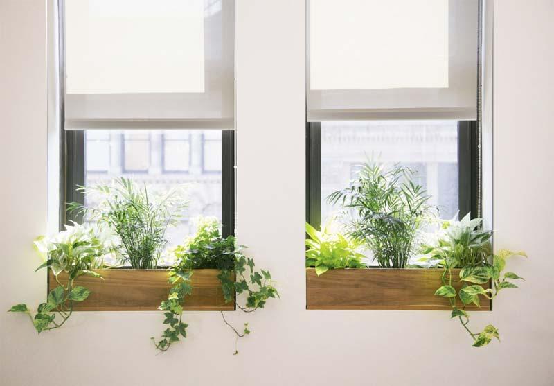 vensterbank plantenbak