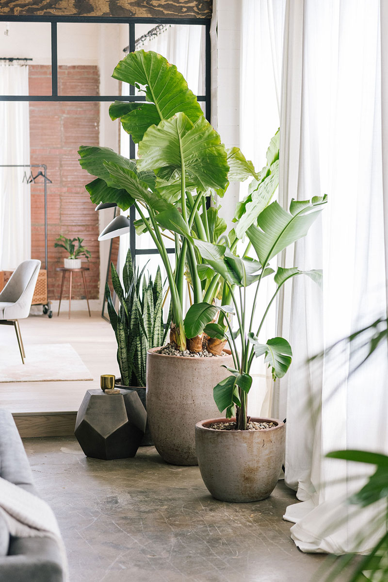 woontrends 2021 statement piece grote plant